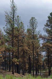 black-forest-burn-scar-sm-199x300